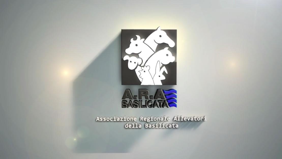 Raccolta Video 2016